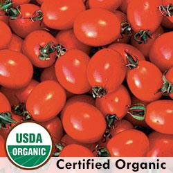 Pricipe Borghese Tomato