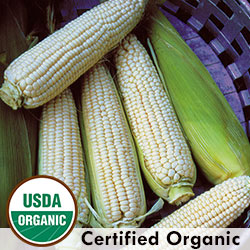 Stowells Evergreen Organic Corn
