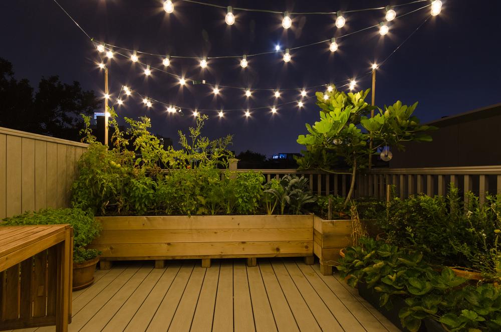 Anna Fischman's rooftop garden in Philadelphia, PA