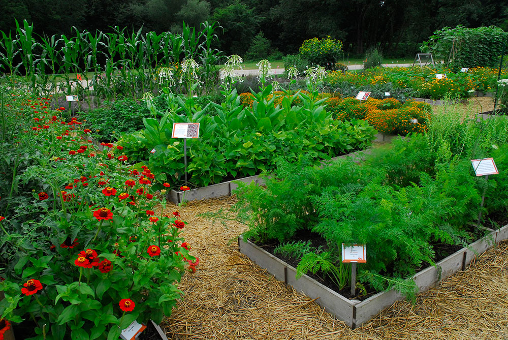 The Diversity Garden in July, 2013.