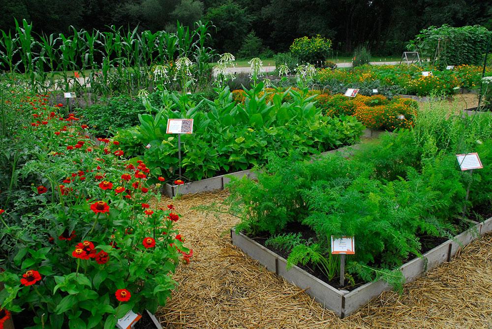The Diversity Garden in July, 2013.