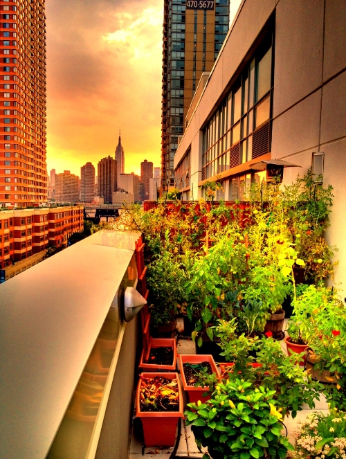 Matthew Basile's patio in Long Island City, NY