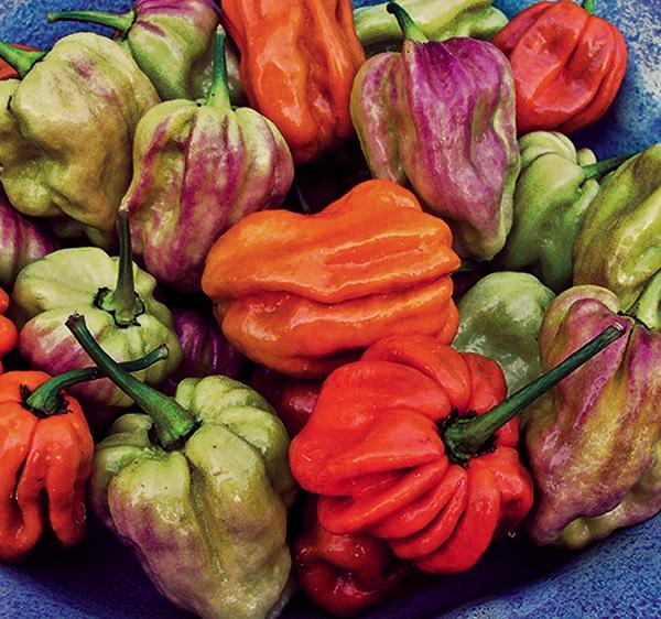 Top ten sizzling heirloom and organic pepper varieties - Best romanian pepper cultivars ...