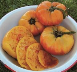 Tomato Gold Medal
