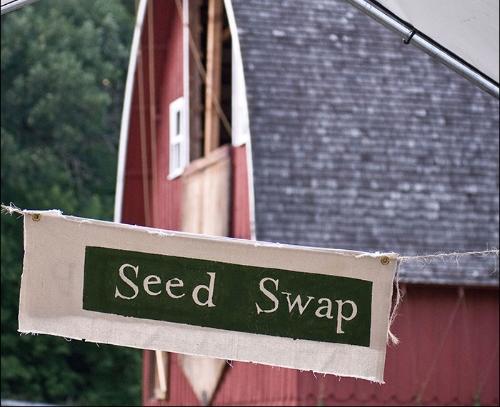 SeedSwapSSE.jpg
