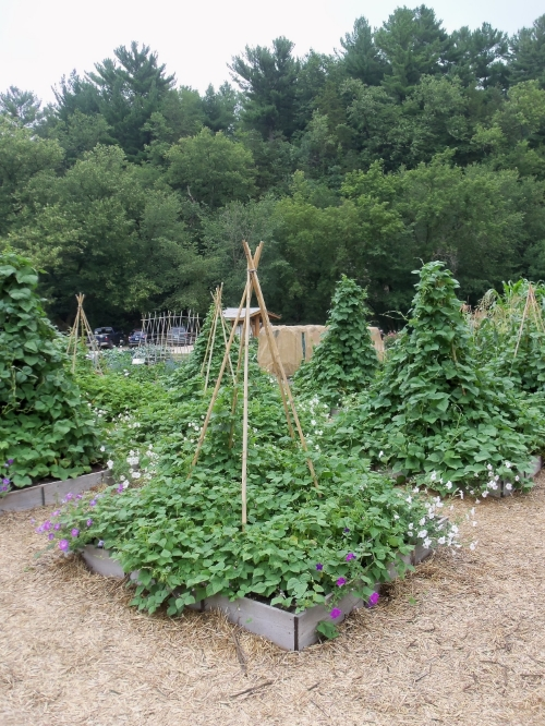 Which Trellis is the Best Trellis — Seed Savers Exchange Blog
