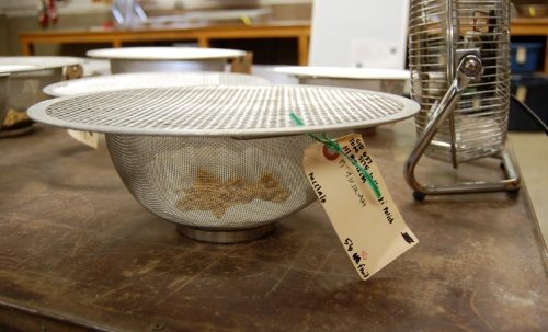Placing the seeds in front of a fan will help them dry faster. Seeds are fully dry when they easily crack in half when bitten into or bent.