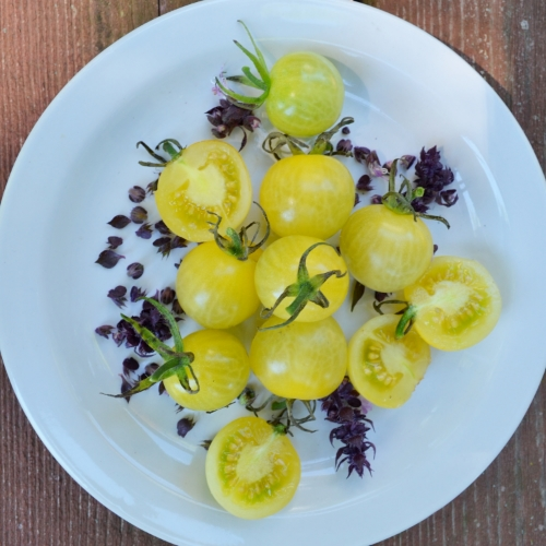 Lemon Drop Tomato and basil flowers on a dessert plate.