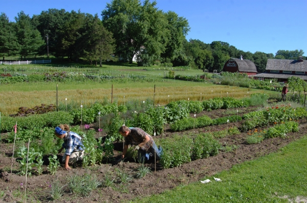 Heritage Farm near Decorah, IA serves as Seed Savers Exchange's home base - with gardens, fields, laboratories, a library, a seed vault, and even a visitors center.