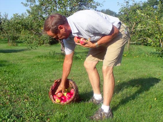 Dan-pickin-apples.jpg