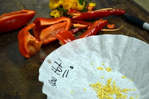 hot-pepper.jpg