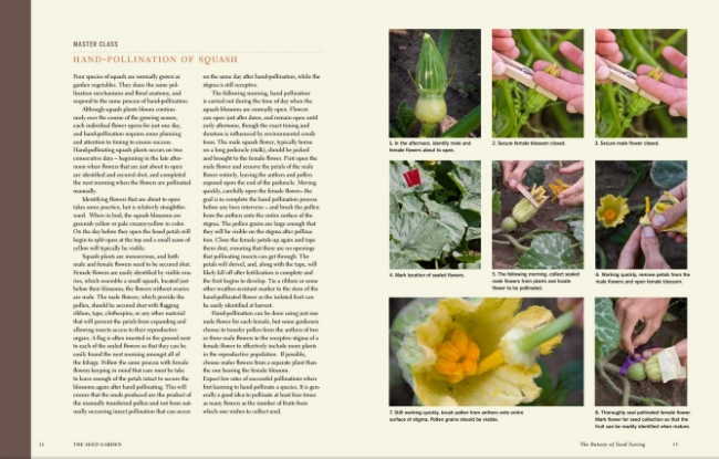 Complex tasks, like hand pollinating squash, are broken down into step-by-step guides for more advanced seed savers.