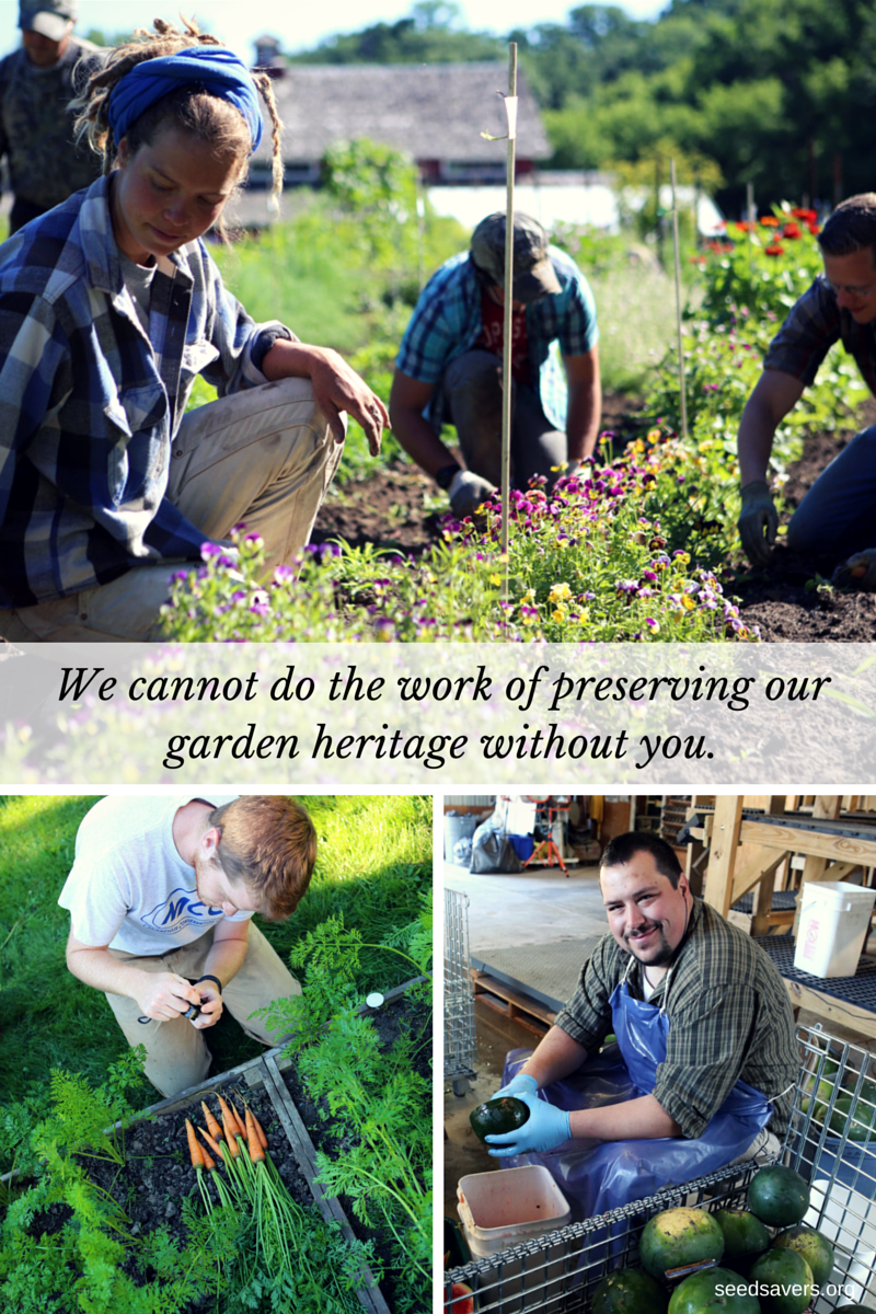 Seed Savers Exchange is a non-profit working to share and save heirloom and open-pollinated seed.