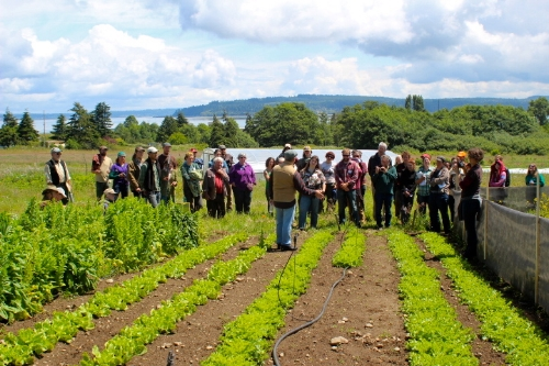 Dr. John Navazio, formerly of the Organic Seed Alliance, evaluates an escarole variety trial with participants of the 2014 Breeding Self-Pollinated Crops workshop at Greenbank Farm.