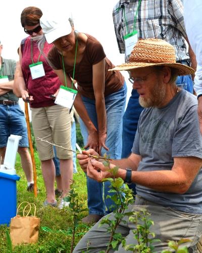 Learn apple tree care