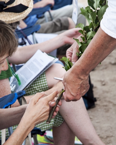 Get hands on with our Historic Orchard