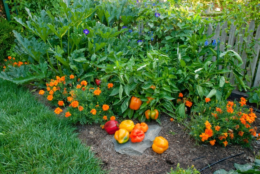 Drought Strategies for Vegetable Gardening — Seed Savers Exchange Blog