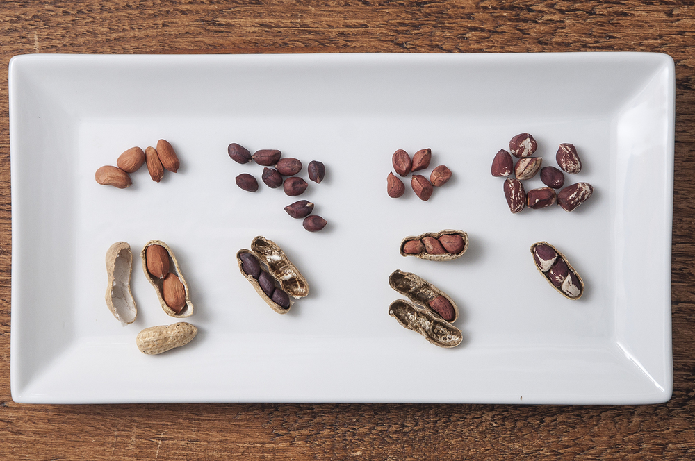 Over 300 color photographs (Like this one, illustrating diversity among peanut varieties)  illuminate this exceptional new resource from Seed Savers Exchange and ORganic Seed Alliance.