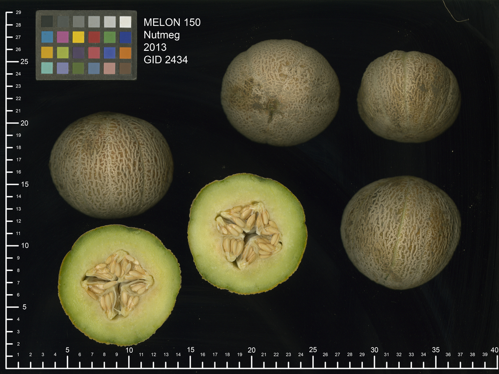 Behold 'Nutmeg', the most delicious melon you'll never have to share.