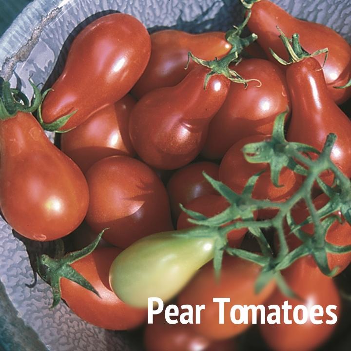 1227-tomato.jpg