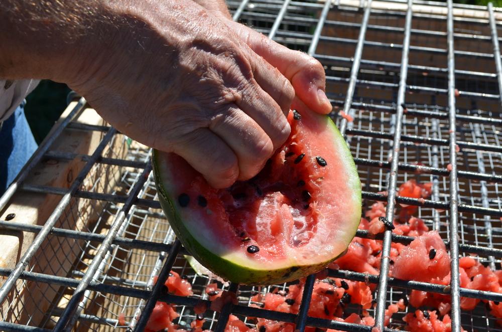 WatermelonSeedScreenSSE.jpg