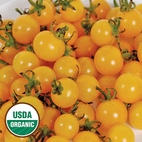 yellow cherry tomatoes - photo #39