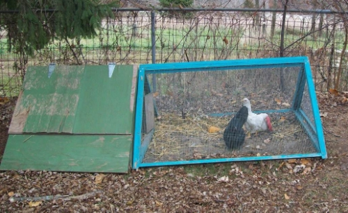 A chicken tractor that allows for garden clean-up or the establishment of new garden beds. It can be moved daily.