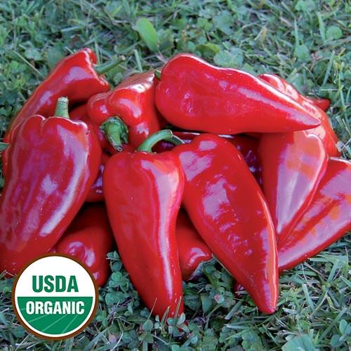 0001-chervena-chushka-pepper-organic.jpg