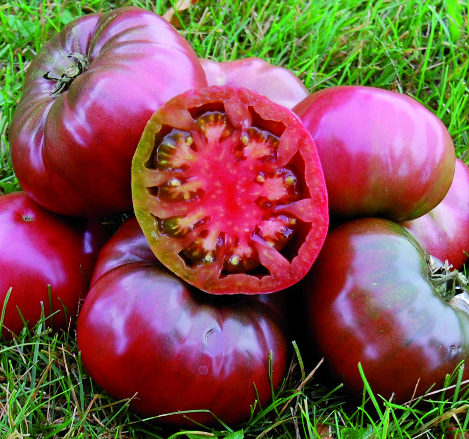 The Cherokee Purple Tomato was introduced by North Carolina member Craig LeHoullier who originally got the seed from J.D. Green of Tennessee.
