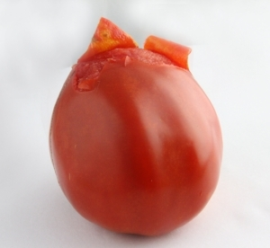 This red tomato has yellow skin over red flesh.