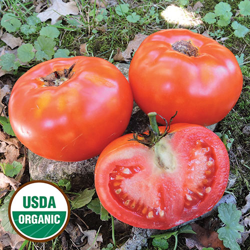 Livingston's Paragon Tomato