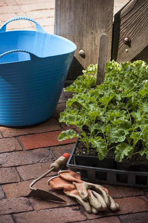 10 Gardening Ideas for 2017 — Seed Savers Exchange Blog