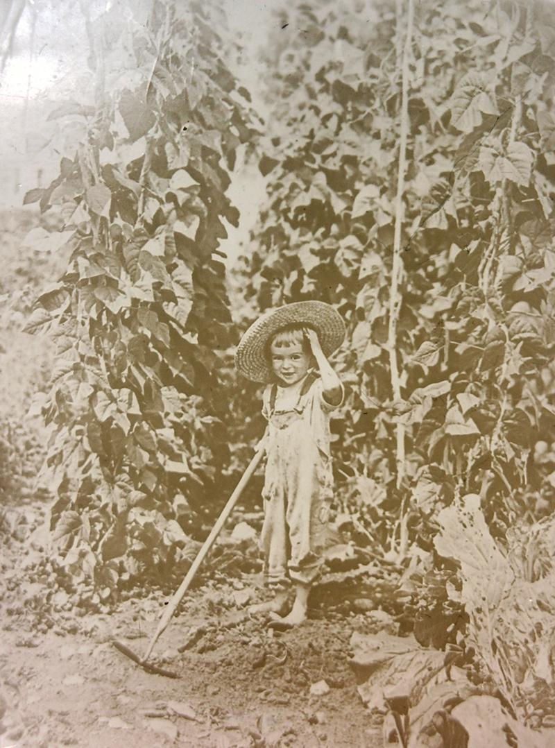 FREELAND ABBOTT, DEBORAH ABBOTT'S FATHER AND FRANK ABBOTT'S SON, STANDS AMID AN IMPRESSIVE PATCH OF CONNECTICUT WONDER BEANS, CIRCA 1922.