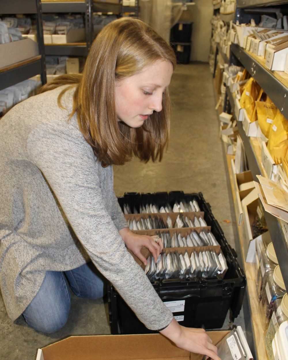 Molly Thompson, curatorial technician, packs the seeds sent to the Svalbard Global Seed Vault in February.