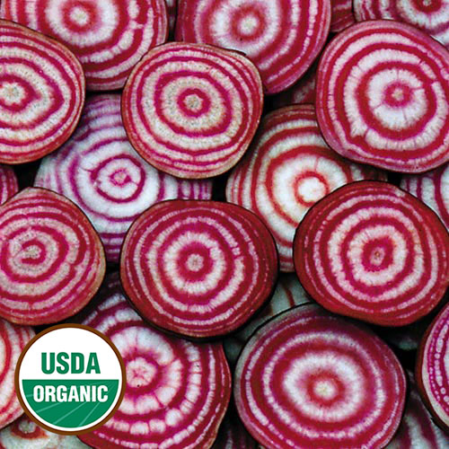 Colorful rings make the Chioggia Beet as eye-catching as it is delicious.