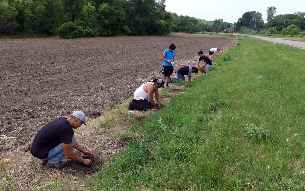 Ho-Chunk members plant fruit and nut trees next to the recently planted corn field to provide food for native bees (pollen and nectar) and for the tribe (fruits and nuts).