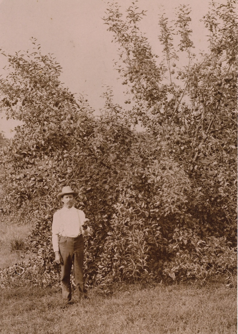 Almanzo Wilder holding an apple from one of his trees, around 1911/1912. (photo: cOURTESY Laura Ingalls Wilder Home and Museum, mANSFIELD, MISSOURI)
