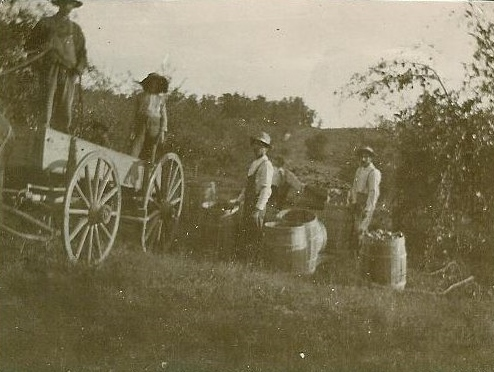 Orchard at Rocky Ridge Farm. Almanzo, middle, during apple picking. (Photo: Courtesy Laura Ingalls Wilder Home and Museum, Mansfield, Missouri)