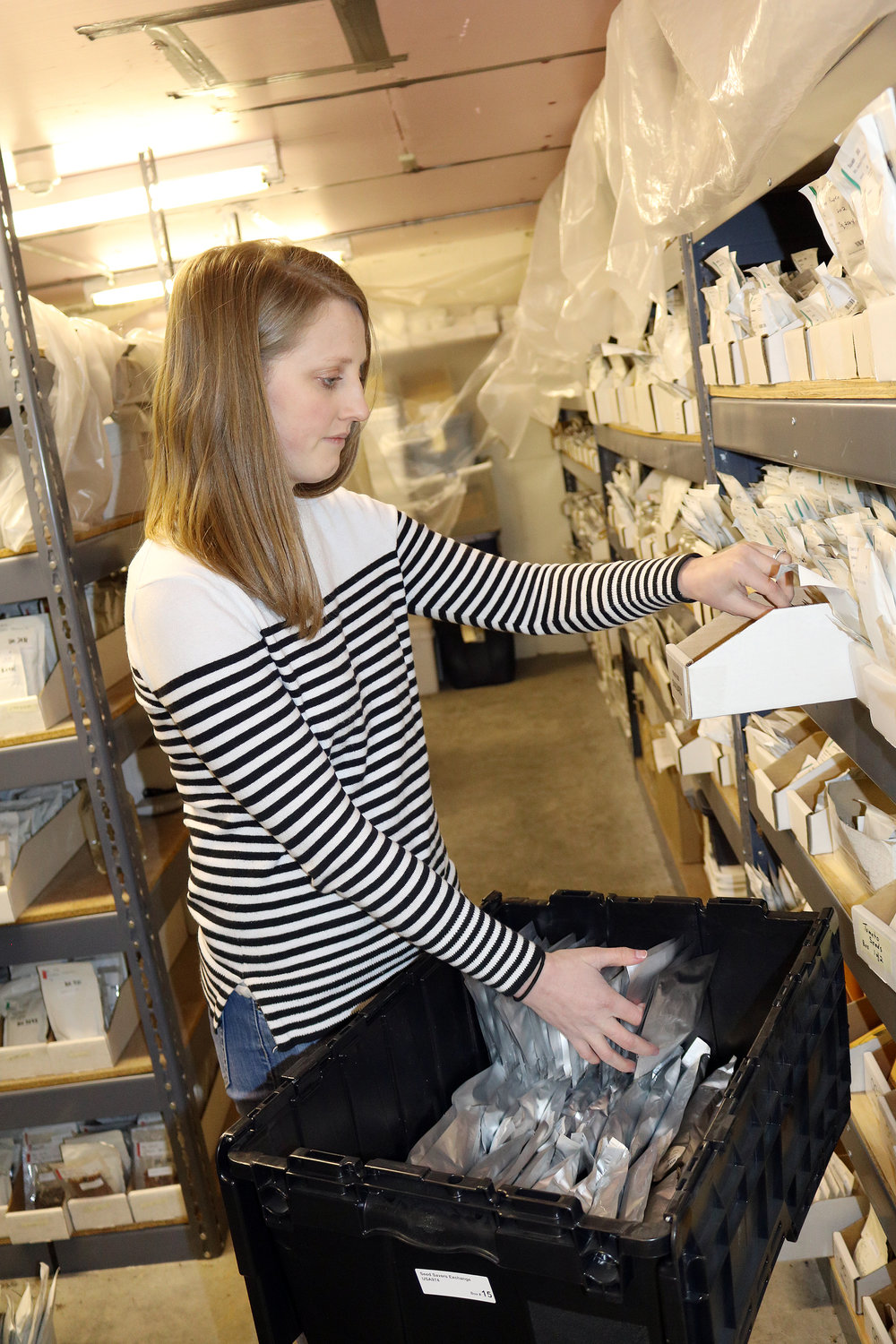 SSE staffer Molly Thompson packs the 242 varieties included in the 2018 shipment to the Svalbard Global Seed Vault.