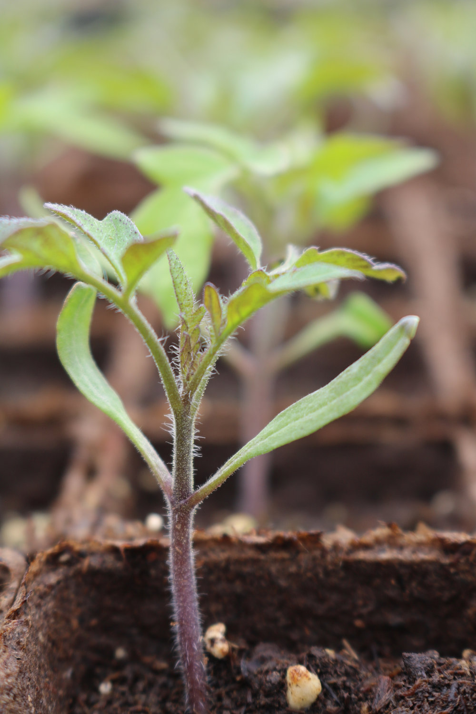 seedling_three.jpg