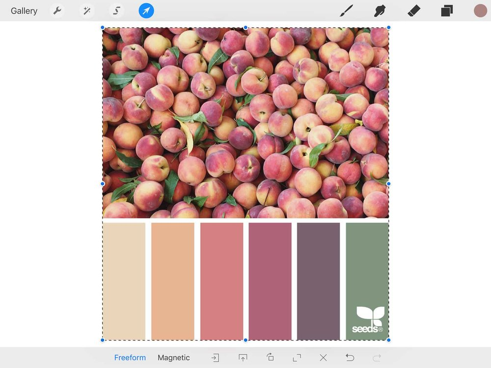 import design seeds image into procreate