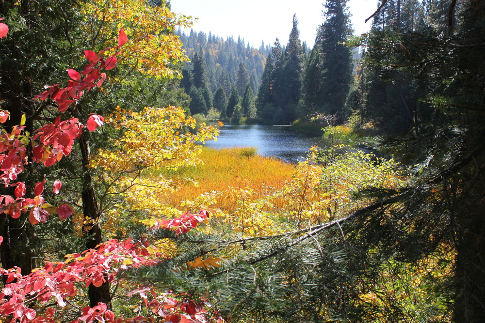 Fall at Sugar Pine's Lower Pond