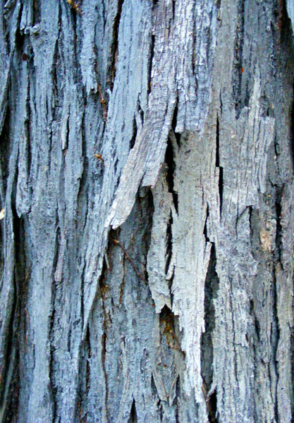 Inky grey blue bark, Art by Scherer, Etsy