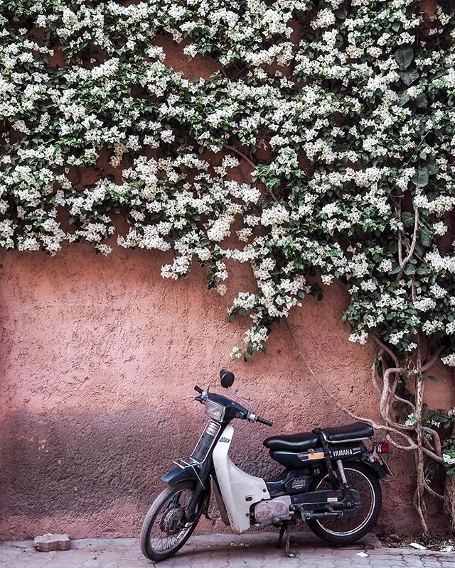 Next time we visit @raquelpougher and I have decided that we will hire a bike to get around (now that I've put it out in the universe it's going to happen). I've driven around Marrakech and out to the desert so I'm confident that we could pull it off. What do you think? . . . . . . . . . . . . . .  #theprettycities#forbestravelguide#iamatraveler#goopgo#mydomainetravels#tlpicks#gglocalgems#verytandc#mycityloves#seemycity#traveldeeper#hello_worldpics#postcardplaces#traveltagged#kings_village#postcardsfromtheworld#culturetrip#bestcitybreaks #insidertravel#mytinyatlas #elledecor#abmlifeisbeautiful#bloooms#lonnymag#inspiredbyflowers#myoklstyle#allthingsbotanical#plantsofinstagram#guardiantravelsnaps#littlestoriesofmylife