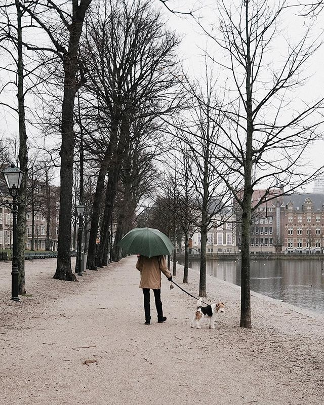 Matilda cover your ears 🐱When I have a dog, I'm 80% certain it is going to look like this one 🐶 . . . . . . . . . . . . . . . . . . . . . . . . . . . . . #theprettycities#living_europe#iamatraveler#topamsterdamphoto#postcardsfromtheworld#goopgo#kings_villages#seemycity#suitcasetravels#mycityloves#forbestravelguide#acolorstory #mydomainetravels#traveldeeper#bitsofbuildings#topeuropephoto#map_of_europe#bestcitybreaks#igersholland#delft#theculturetrip#athomeintheworld#denhaag#traveldreamseekers#wonderfulplace#ladieswhotravel#dametravel#thediscoverer#pathport#whpcolorwheel