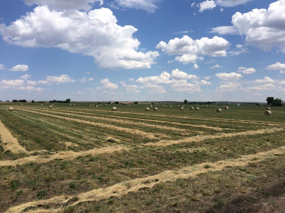 Hay field 7.12.15.jpg