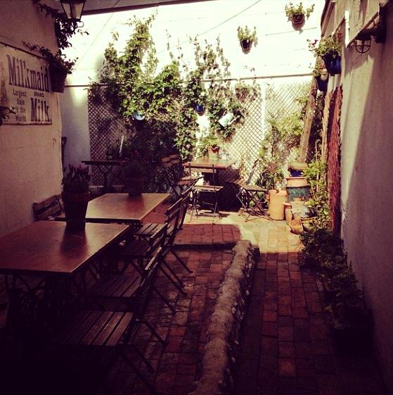 blackbird garden.JPG