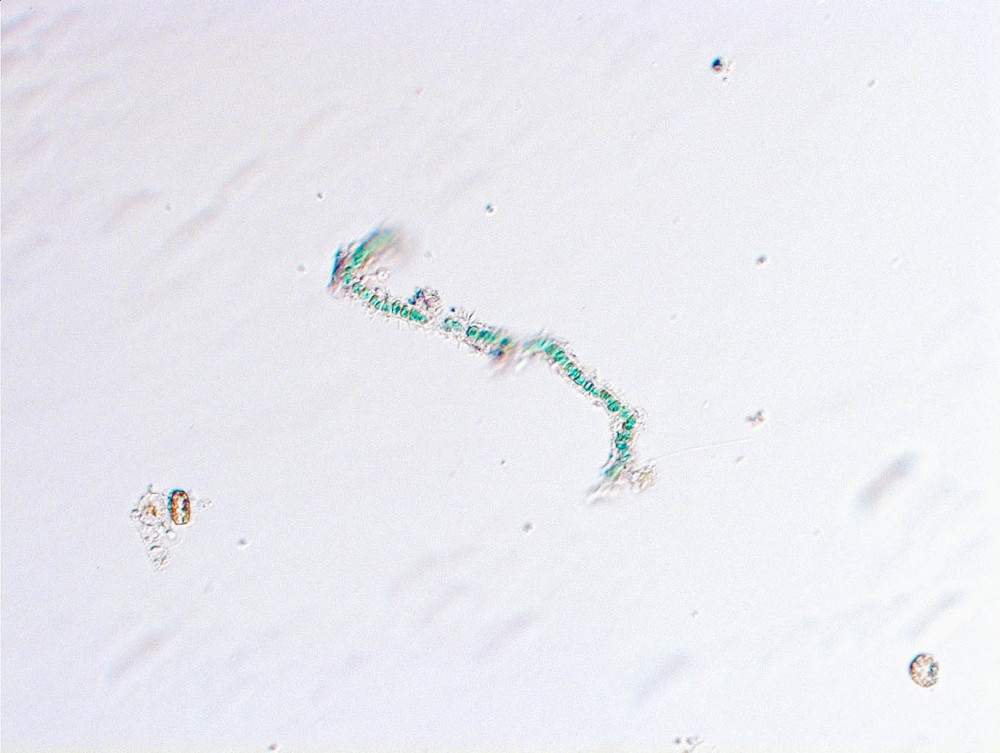 Crystal-6.jpg