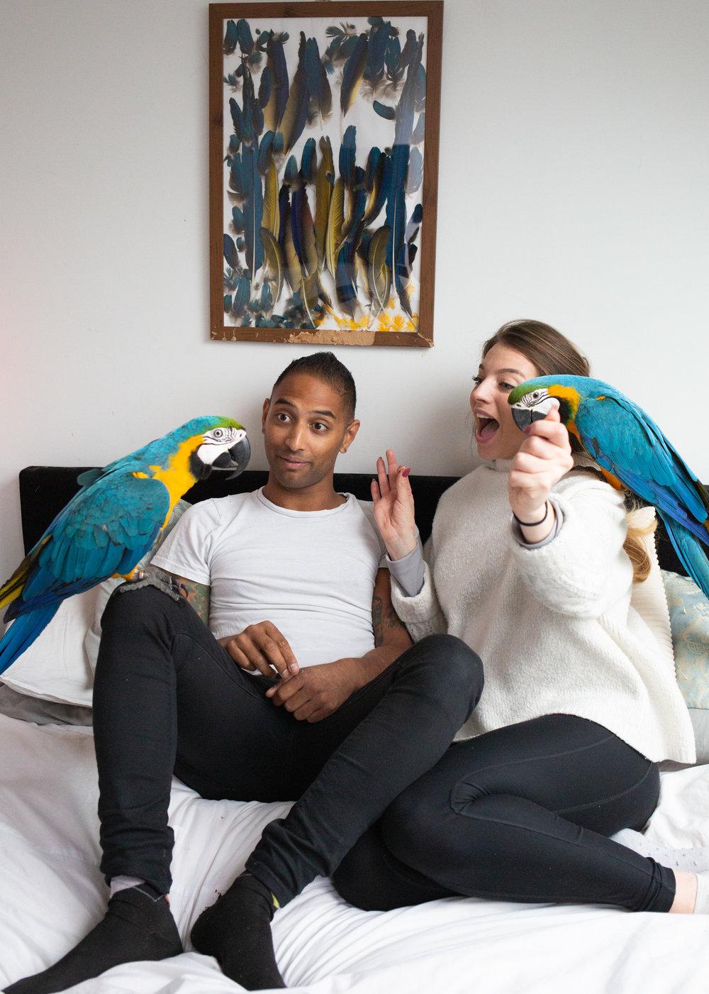 Macaws-4.jpg