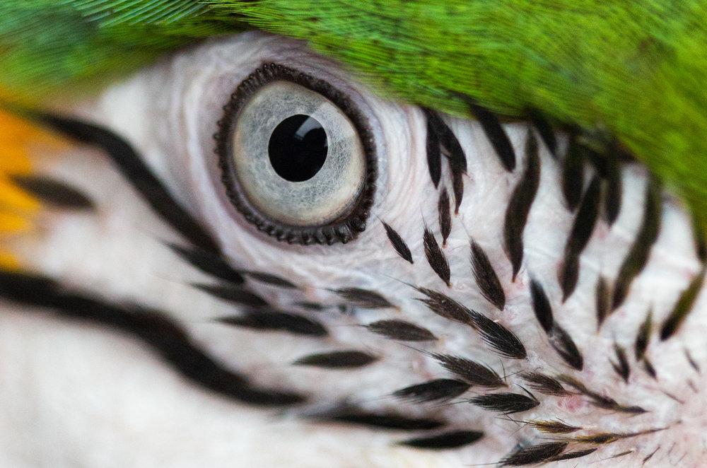 Macaws-8.jpg